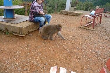 Un singe qui se promène