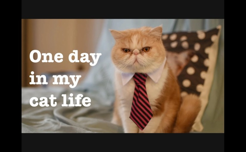 One day in my catlife