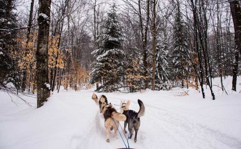 Montréal ! Les activités à fairel'hiver